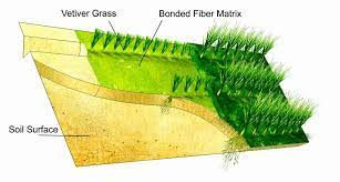 Cỏ Vetiver được ứng dụng để chống xói mòn đất