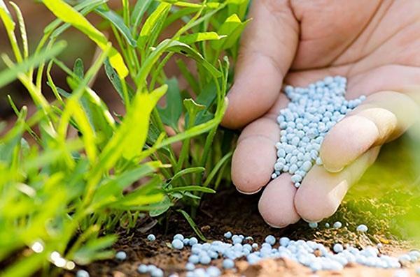 Amoni Clorua ứng dụng trong ngành sản xuất phân bón